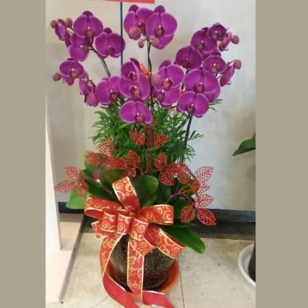 D007蘭花組合盆栽開幕喬遷,升遷榮調,室內景觀佈置花禮