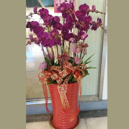D010蘭花組合盆栽開幕喬遷,升遷榮調,室內景觀佈置花禮