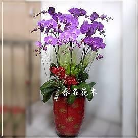 D030蘭花組合盆栽開幕喬遷,升遷榮調,室內景觀佈置花禮,居家佈置台中花店