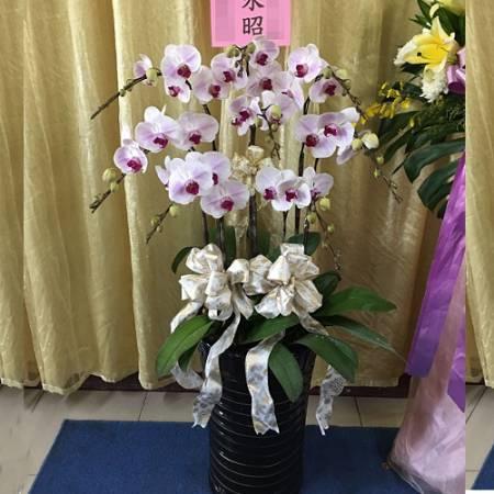 H089追思花禮白色蘭花弔唁蝴蝶蘭盆