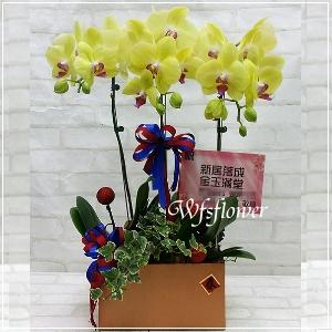 H065桌上型蝴蝶蘭花組合盆景居家佈置開幕落成賀禮
