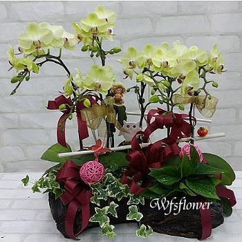 H066桌上型蝴蝶蘭花組合盆景居家佈置開幕落成賀