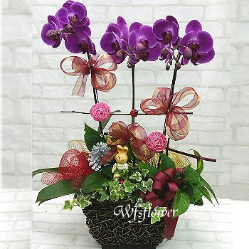 H067桌上型蝴蝶蘭花組合盆景居家佈置開幕落成賀