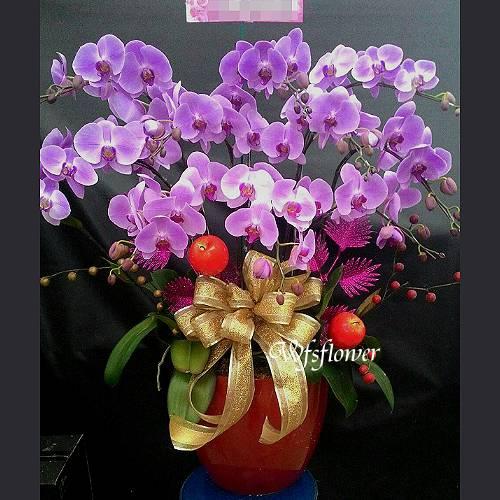 H012桌上型蝴蝶蘭花組合盆景居家佈置開幕落成賀禮