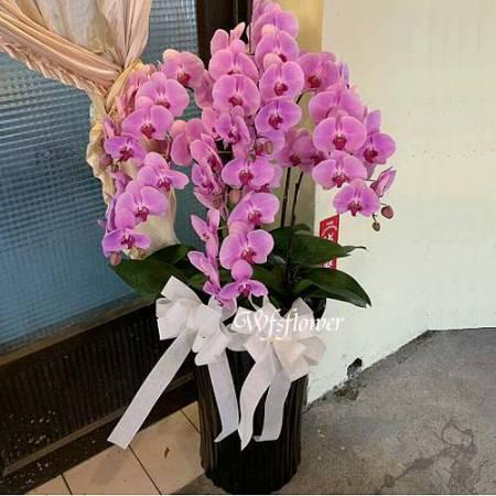 H080特級蝴蝶蘭花7株組合盆景喜慶追思花禮台南市花店