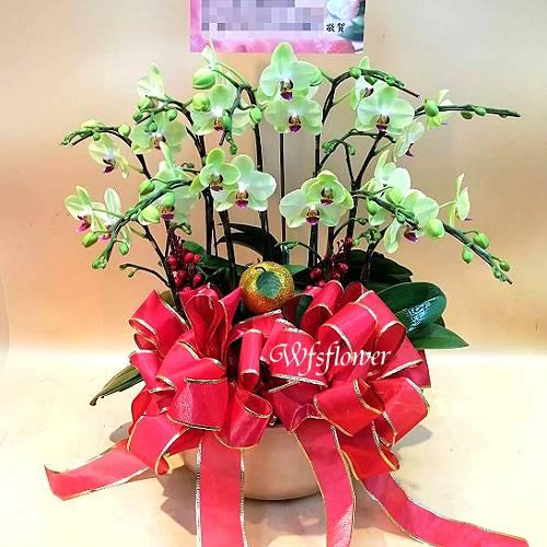 H008桌上型哇莎咪蝴蝶蘭花盆景慶開幕台南市花店