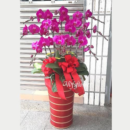 H082蝴蝶蘭組合盆景鴻圖大展廟會開幕台南市花店