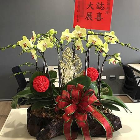 H083蝴蝶蘭組合盆景鴻圖大展廟會開幕台南市花店
