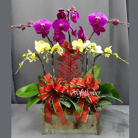 H086桌上型蝴蝶蘭木盒盆景落成台南市花店