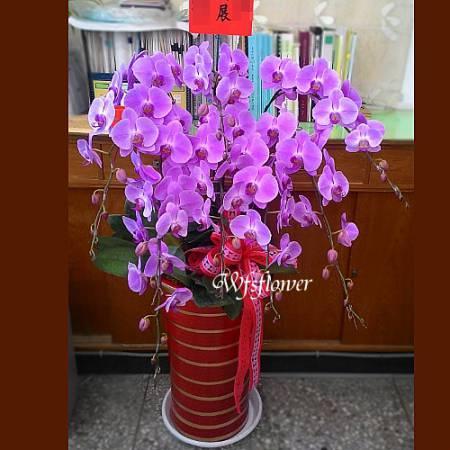 H056紅花10株蝴蝶蘭盆景祝賀榮陞開幕落成