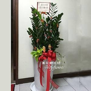 E067金錢樹組合盆景吉祥花禮開幕賀禮台南市花店