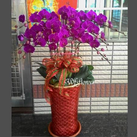 H064蝴蝶蘭花組合盆景居家佈置開幕落成賀禮台南市花店