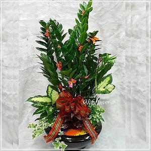 E022金錢樹組合盆景吉祥花禮開幕賀禮台南市花店