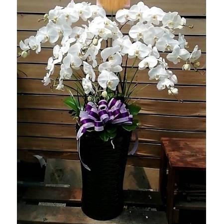 D133蘭花