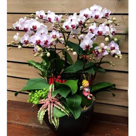 D134蘭花