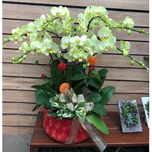 D135蘭花
