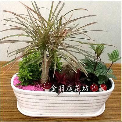 [F018]組合盆栽創意個性桌上型盆栽