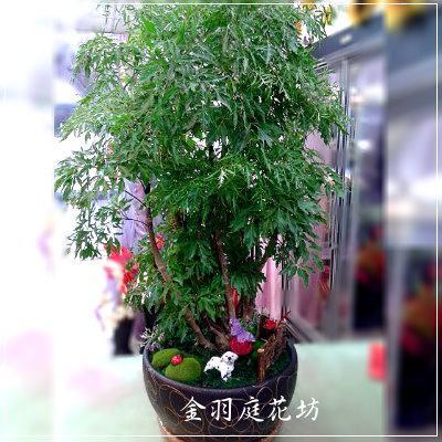 [F026]富桂樹開幕發財盆景榮陞喬遷新居落成
