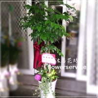 J008落地型進才(財)樹喜慶開運盆栽開幕喬遷盆栽