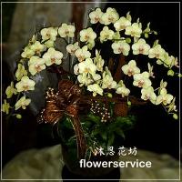 D005祝賀蘭花盆栽喜慶盆栽開幕喬遷蘭花盆栽