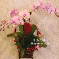 D094祝賀蘭花盆栽新春賀禮