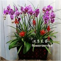 D098祝賀蘭花盆栽新春賀禮