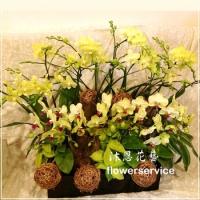 D099祝賀蘭花盆栽新春賀禮