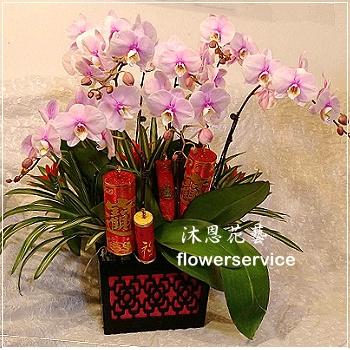 D101祝賀蘭花盆栽新春賀禮