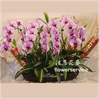 D102祝賀蘭花盆栽新春賀禮