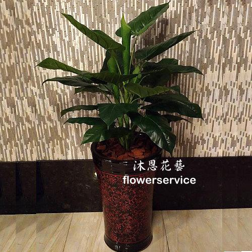 R021人造盆栽店面擺飾盆栽