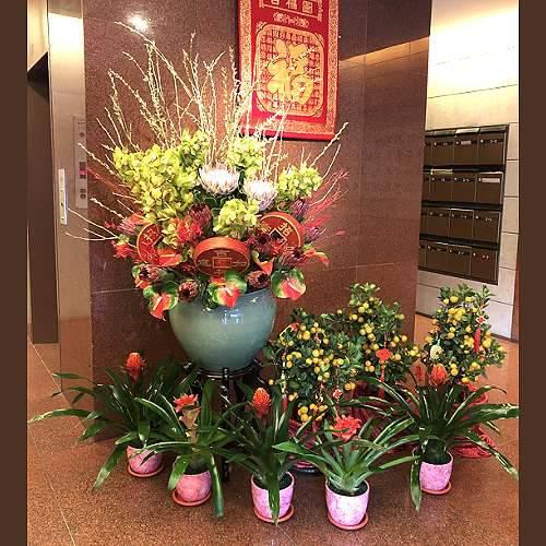 M079新春盆花精緻盆花祝賀盆花新春布置