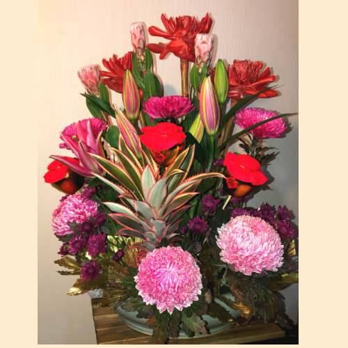 M080新春盆花精緻盆花祝賀盆花