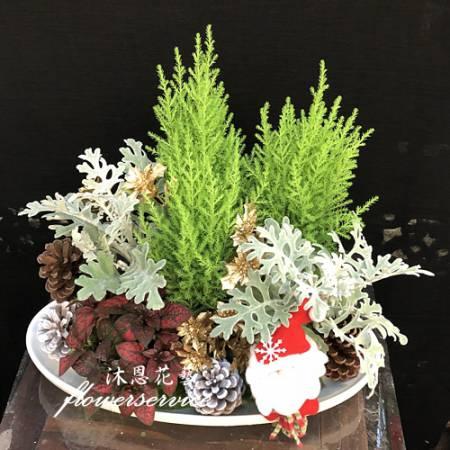 J070聖誕節花禮聖誕桌上盆栽