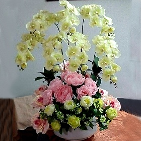 M023台北花店沐恩花藝祝賀盆花喜慶盆花