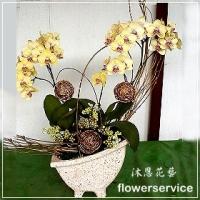 D049台北花店沐恩花藝祝賀蘭花盆栽喜慶盆栽開幕喬遷蘭花盆栽
