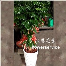 J023生意興隆開幕開店開運旺旺樹盆栽