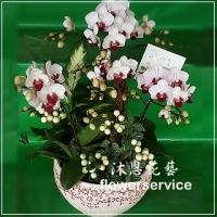 D052台北花店沐恩花藝祝賀蘭花盆栽喜慶盆栽開幕喬遷蘭花盆栽