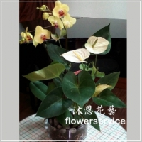J031台北士林花店沐恩花藝喜慶開運盆栽開幕喬遷盆栽