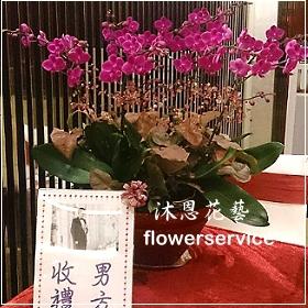 D057台北花店沐恩花藝祝賀蘭花盆栽喜慶盆栽開幕喬遷蘭花盆栽