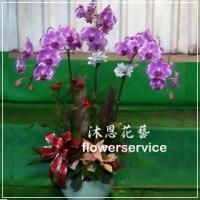 D059台北花店沐恩花藝祝賀蘭花盆栽聖誕節花禮