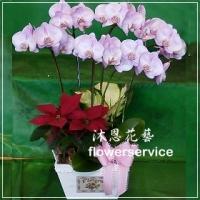 D060台北花店沐恩花藝祝賀蘭花盆栽聖誕節花禮