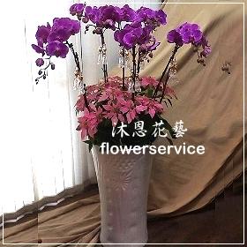 D062台北花店沐恩花藝祝賀蘭花盆栽聖誕節花禮