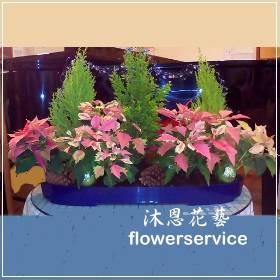 M033聖誕節花禮聖誕節盆花
