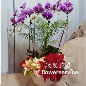 D063台北花店沐恩花藝祝賀蘭花盆栽聖誕節花禮