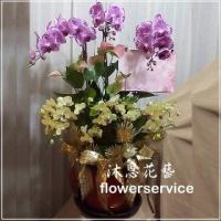 D064台北花店沐恩花藝祝賀蘭花盆栽聖誕節花禮