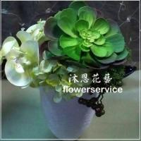 M041台北花店沐恩花藝祝賀盆花喜慶盆花