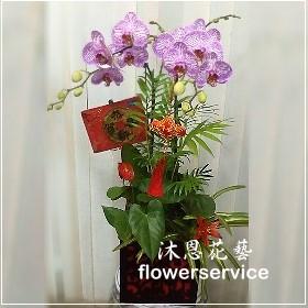 D067台北花店沐恩花藝祝賀蘭花盆栽喜慶盆栽新春蘭花盆栽