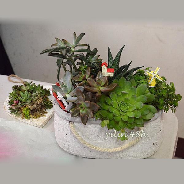 E044多肉植物開幕喬遷辦公室榮升桌上盆景