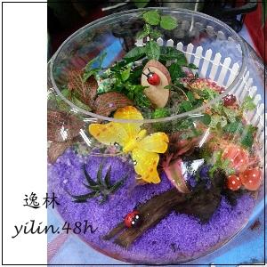 E035玻璃球~開運組合造型盆栽桌上盆景逸林竹北花店新竹花店