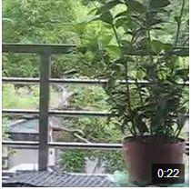 連結FB 上影片